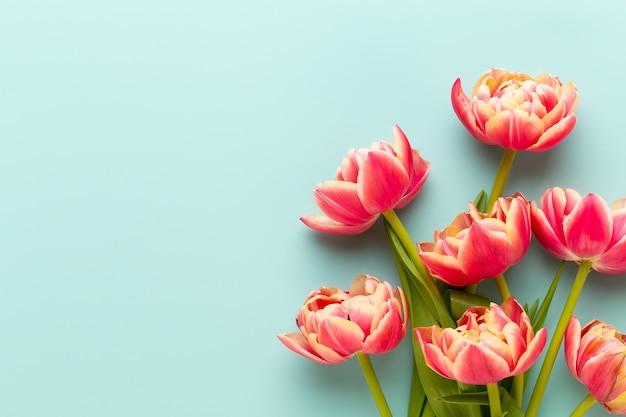 Flores da primavera, tulipas em fundo de cores pastel