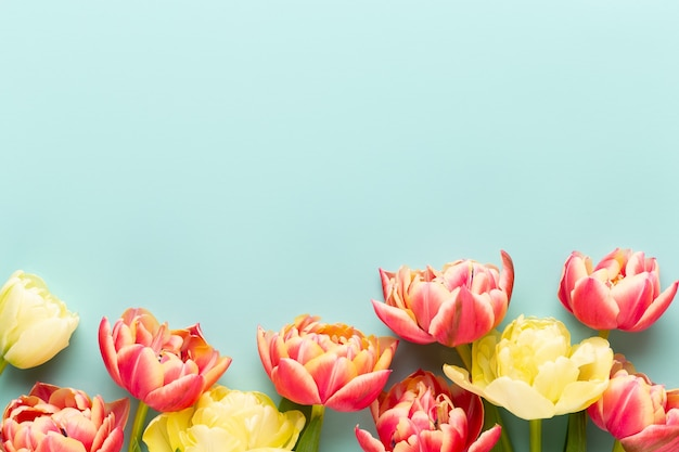 Flores da primavera. tulipas em fundo de cores pastel.