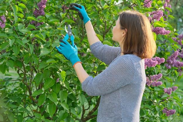 Flores da temporada de primavera, jardineira com luvas e tesouras de podar ramos lilases