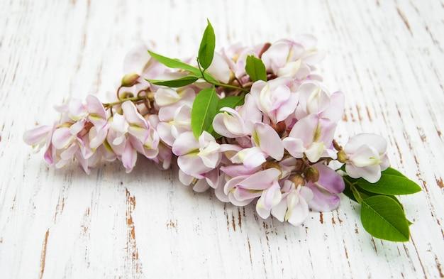 Flores de acácia