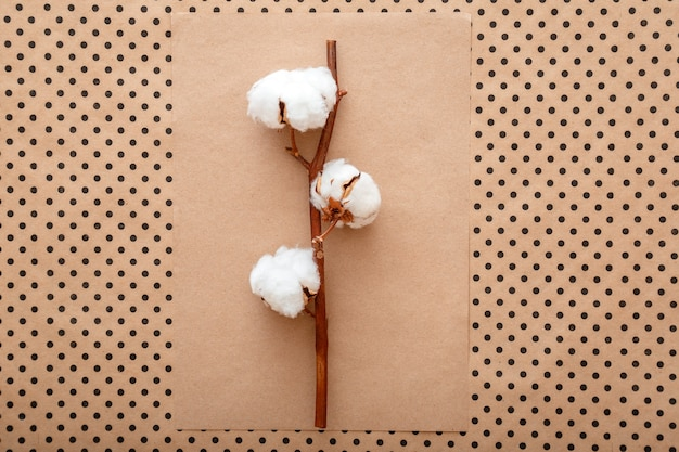 Flores de algodão desabrochando em fundo vintage de papel artesanal marrom. layout criativo de composição de flores de algodão em leito plano de cor terra pastel. vista de cima da cena com estética minimalista.