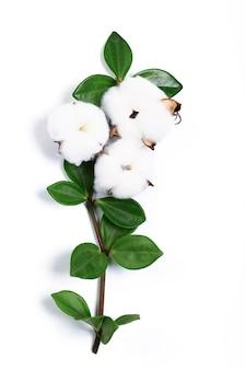Flores de algodão em um galho com folhas verdes