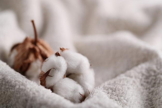 Flores de algodão