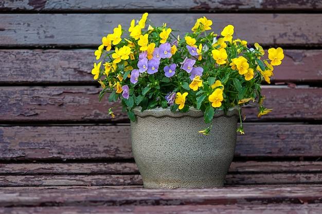 Flores de amor-perfeito amarelas e roxas no vaso de flores