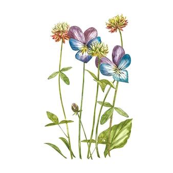 Flores de amor-perfeito e trevo. ilustração botânica em aquarela.
