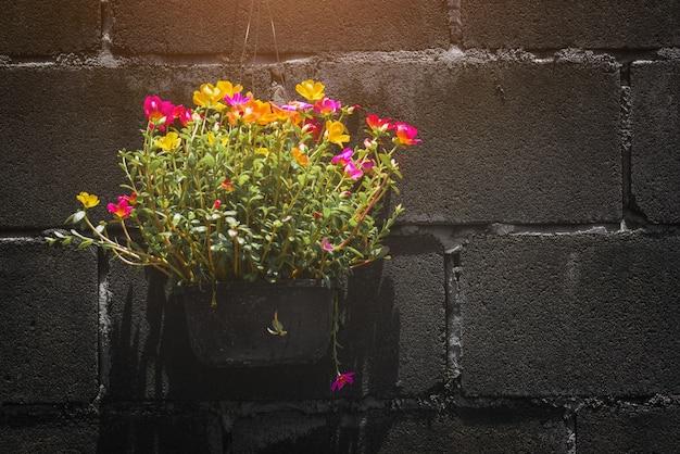 Flores de beldroegas em um vaso contra uma parede escura