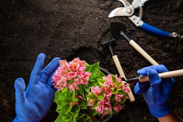 Flores de buganvílias rosa com vista superior para pequena ferramenta de decoração de jardinagem. hobby de botânica em casa.