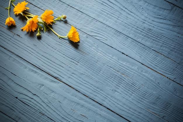 Flores de calêndula em fundo azul de madeira