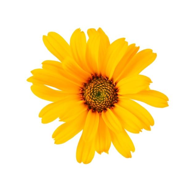 Flores de calêndula isoladas no fundo branco. flor de calêndula. planta medicinal à base de plantas. vista do topo.