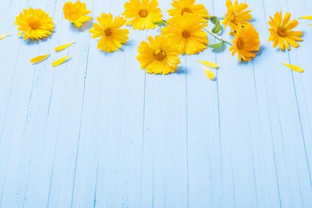 Flores de calêndula na mesa de madeira azul