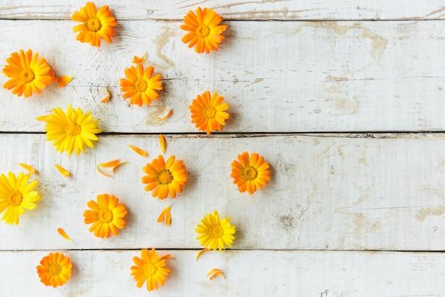 Flores de calêndula
