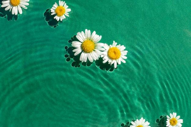 Flores de camomila em água verde sob luz natural. vista superior, configuração plana.