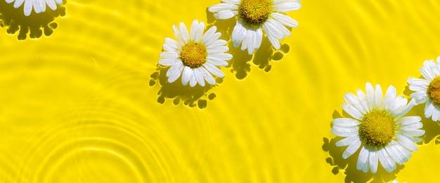 Flores de camomila em um fundo de água amarela com círculos concêntricos de uma gota. vista superior flat lay. bandeira.