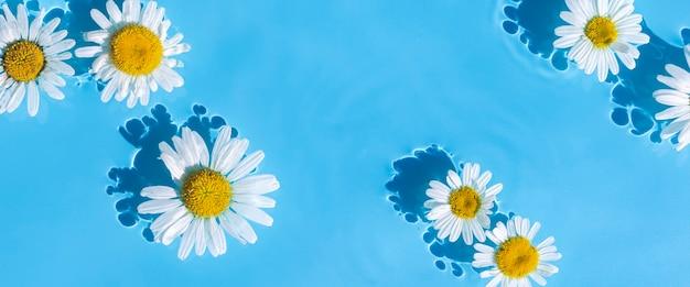 Flores de camomila em um fundo de água azul. vista superior, configuração plana. bandeira.