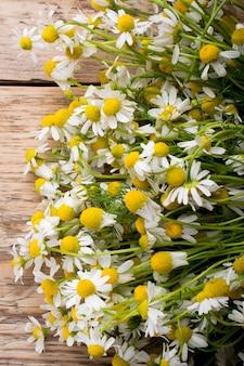 Flores de camomila em um fundo de madeira. fotografia de estúdio.