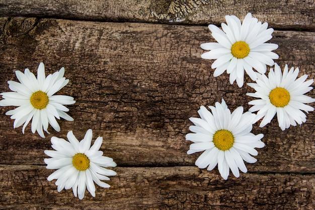 Flores de camomila fresca na mesa de madeira. vista superior com espaço de cópia