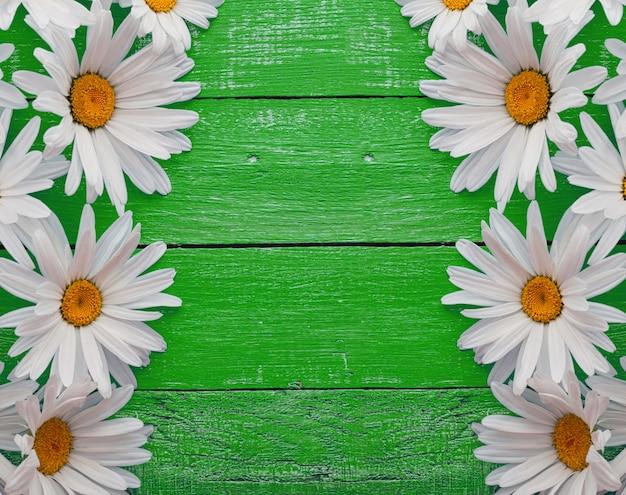 Flores de camomila margarida em fundo de madeira