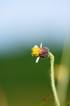 Flores de camomila no prado verde e flores da primavera no campo com a luz solar