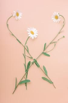 Flores de camomila são dispostas em uma bela composição. vertical, vista superior. configuração plana