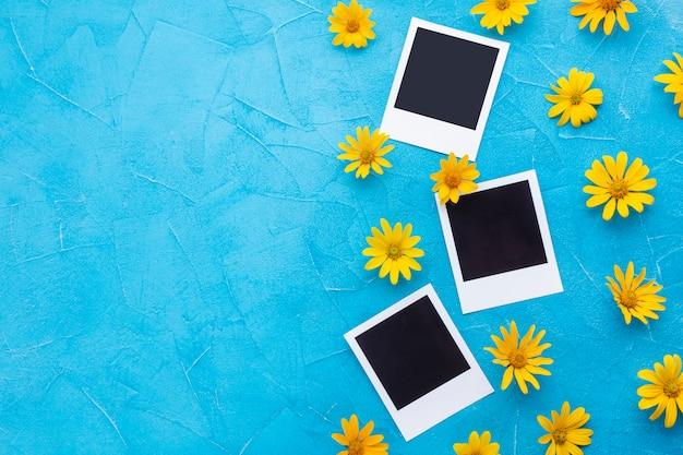 Flores de cardo de ostra espanhol e fotos polaroid