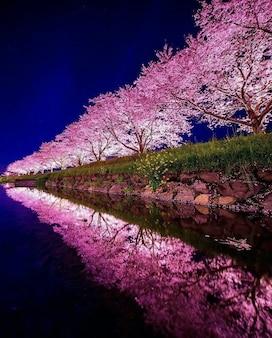 Flores de cerejeira à beira do rio