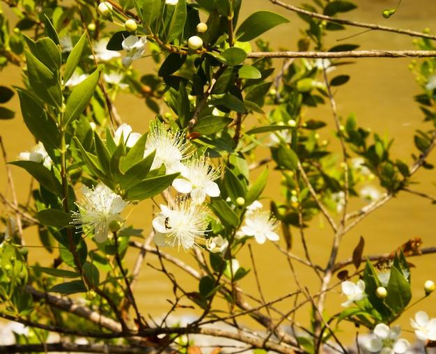 Flores de cerejeira à luz do sol. delicadas flores de cerejeira brancas, dia de primavera