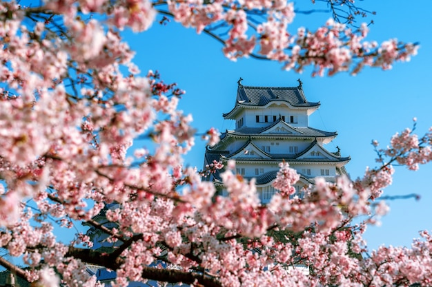 Flores de cerejeira e castelo em himeji, japão.