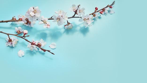 Flores de cerejeira em flor na superfície azul pastel