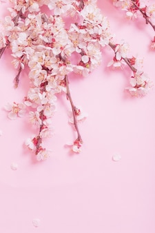 Flores de cerejeira em fundo de papel rosa
