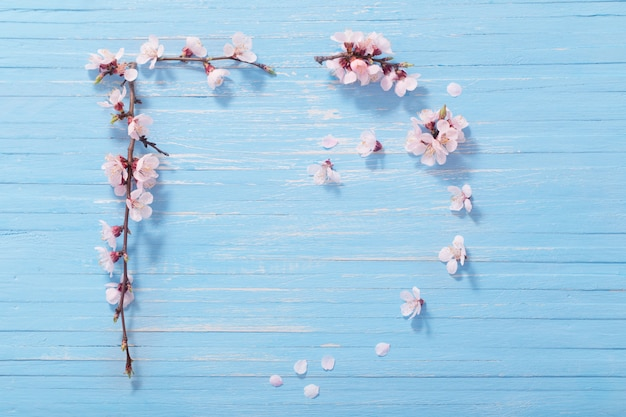 Flores de cerejeira rosa sobre fundo de madeira
