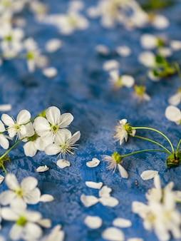 Flores de cerejeira sobre fundo azul de concreto com copyspace