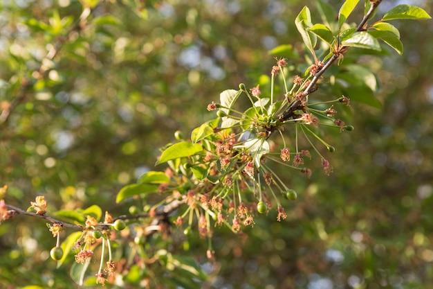 Flores de close-up em um galho de árvore