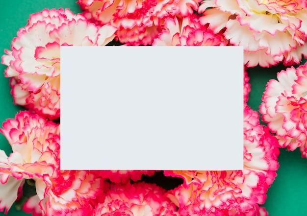 Flores de cravo rosa com espaço de cópia
