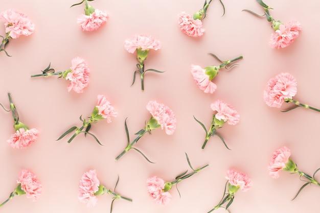 Flores de cravo rosa em fundo pastel. camada plana, vista superior, espaço de cópia.