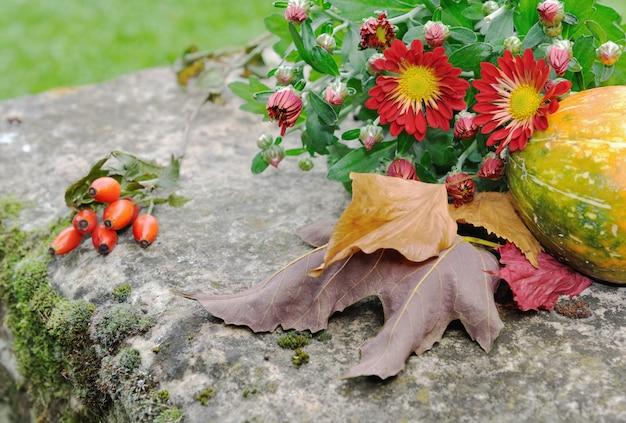 Flores de crisântemo e folhas caídas