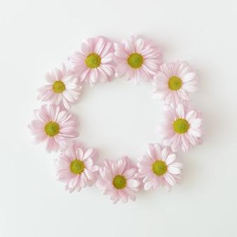 Flores de crisântemo roxas claras dispostas em um círculo sobre um fundo branco. casamento primavera verão e conceito do dia das mães.