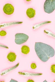 Flores de crisântemo verde; folhas e veronica em fundo rosa