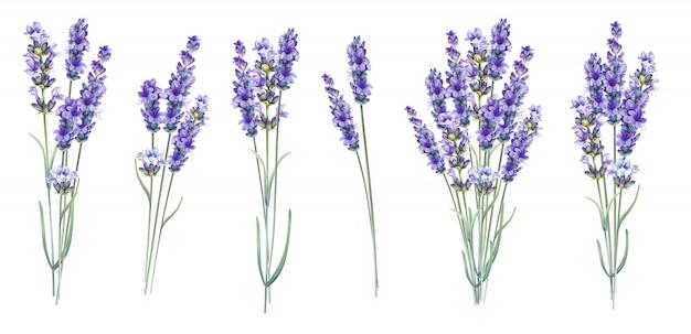 Flores de ervas aromáticas de lavanda.