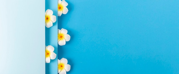 Flores de frangipani aparecem em um fundo de papel azul dobrado. vista superior, configuração plana. bandeira.