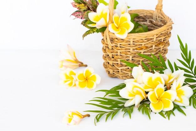 Flores de frangipani em arranjo de cesta em estilo de cartão postal