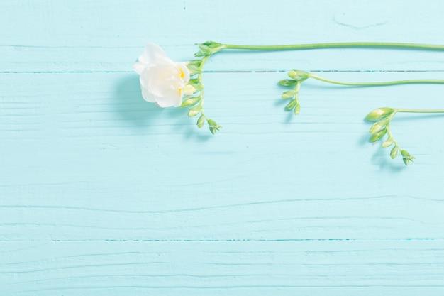 Flores de frésia em fundo de madeira pintado