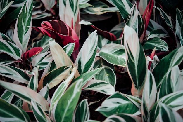 Flores de fundo abstrato no graden