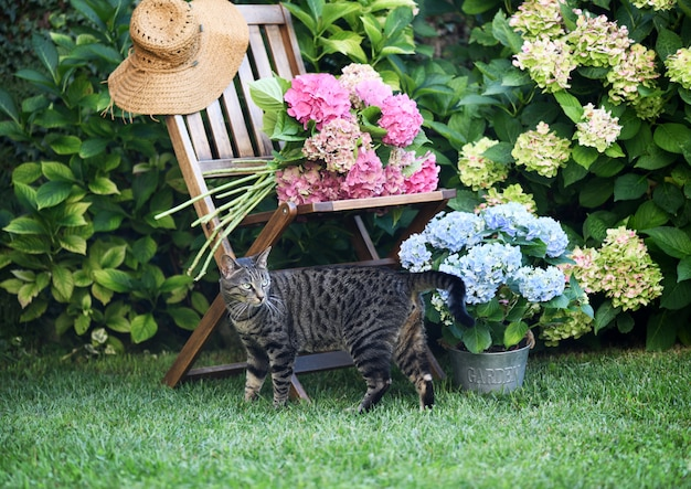 Flores de gato e hortênsia