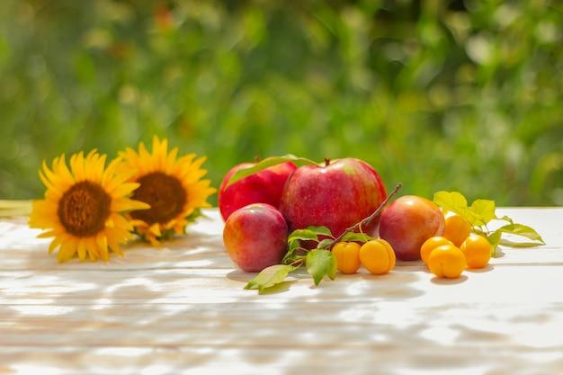 Flores de girassol, maçãs frescas e ameixas em uma mesa de madeira no jardim em um dia ensolarado