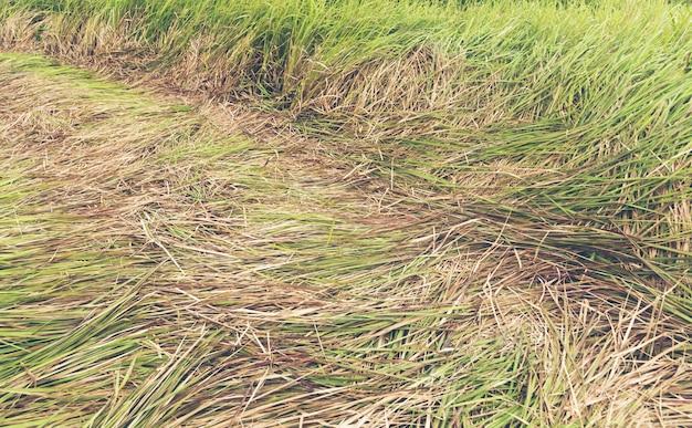Flores de grama linda na selva tropical com luz solar de manhã, imagem de filtro vintage