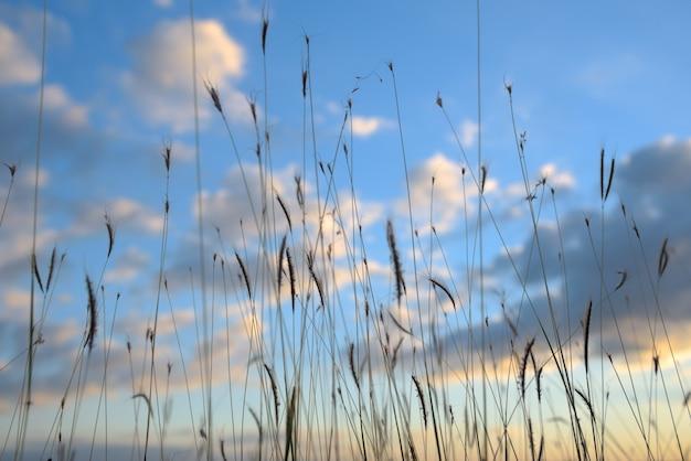 Flores de grama no fundo do céu azul