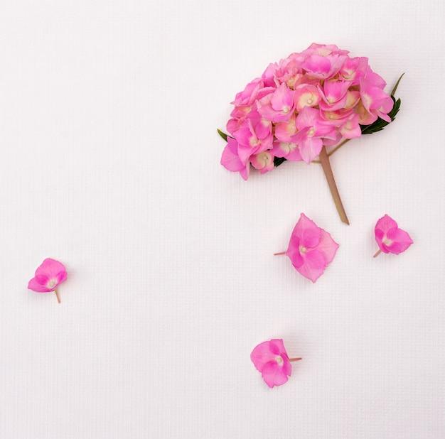 Flores de hortênsia rosa sobre fundo branco, com espaço de cópia para o projeto.