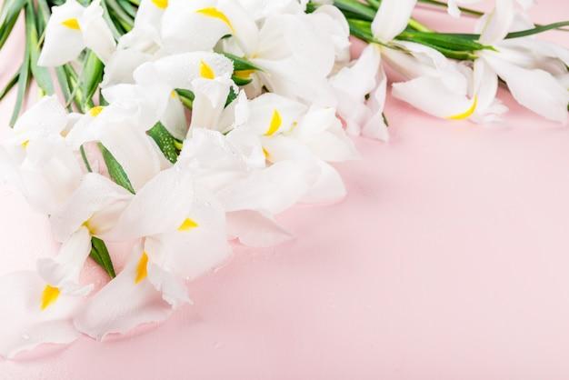 Flores de íris branco lindo em fundo rosa
