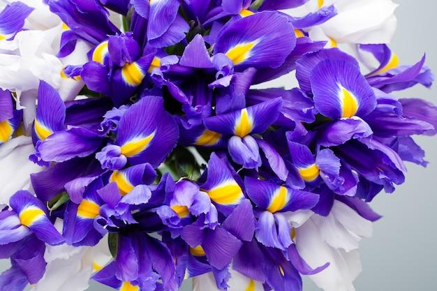 Flores de íris na cor violeta