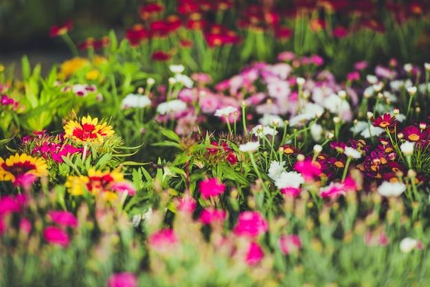 Flores de jardim coloridas